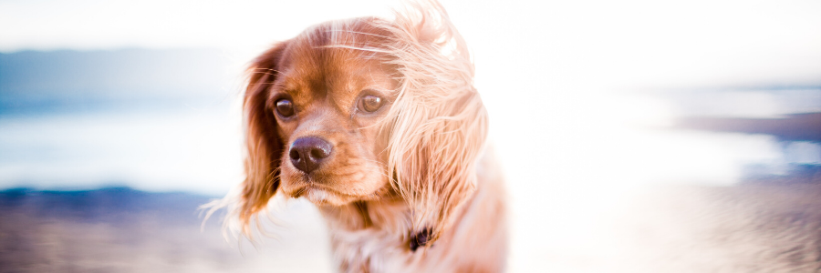 5 Video Tips for Foster Pet Parents